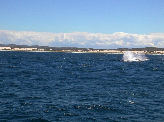 a gust of air - blowhole from a whale