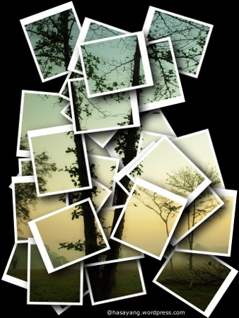 trees collage